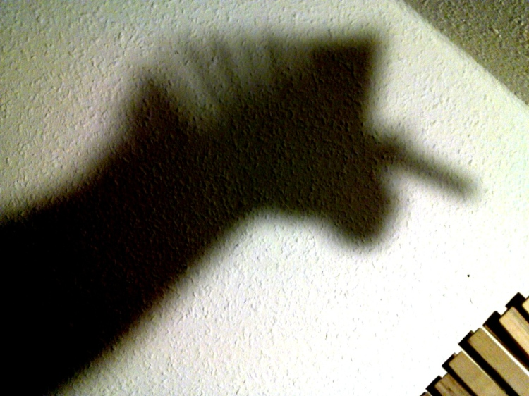 a shadow in form of a unicorn